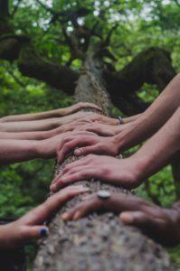 Hände verschiedener Menshen auf einem Baumstamm